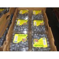 Blueberries Fresh Driscoll 12/6 Oz